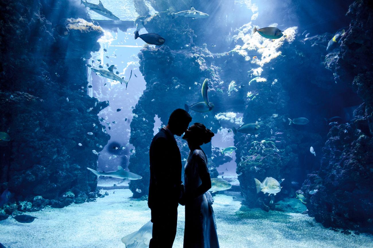 Photographe de mariage Monaco Musée océanographique
