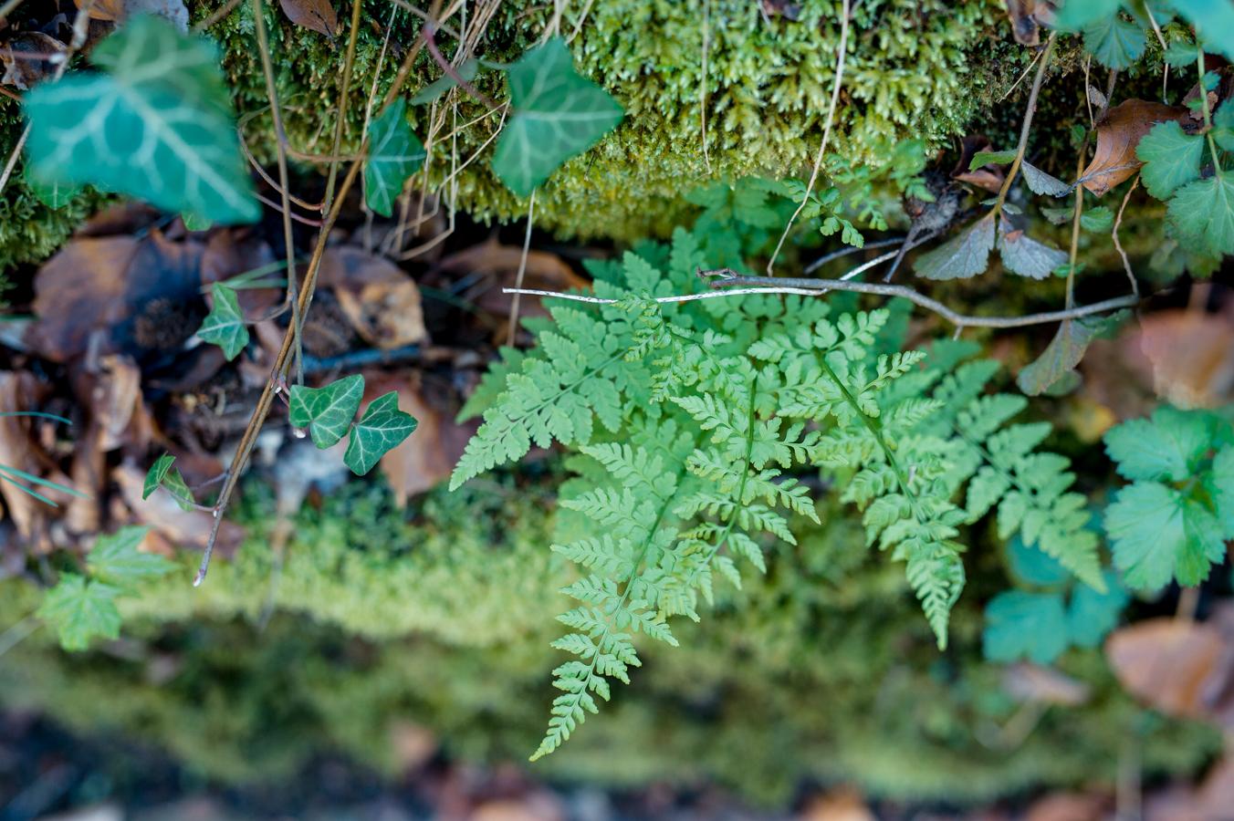 Végétation luxembourg fougère grund